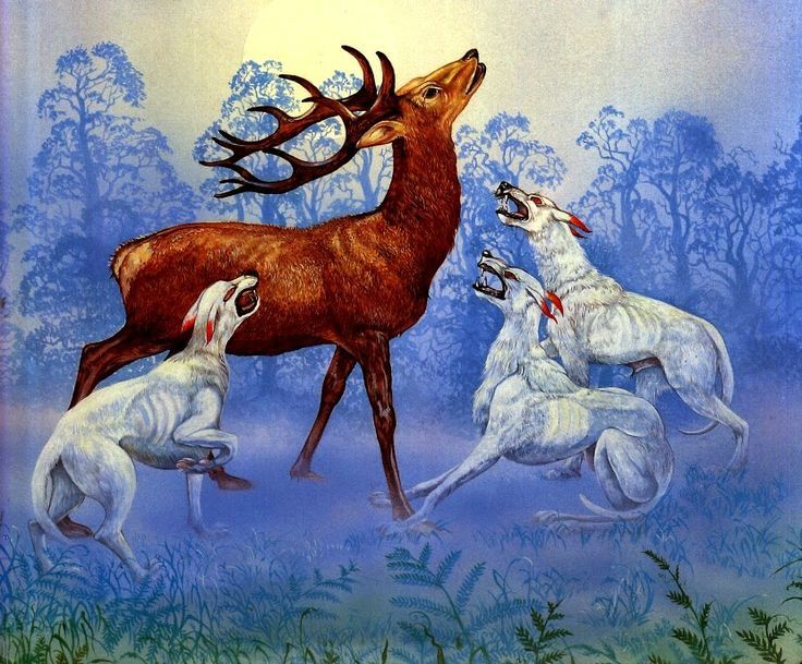 Arawn white hounds hunting a deer