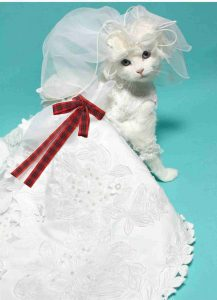Cat In Wedding Dress Tartan Bow