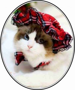 Pretty Kitty in Tartan Oval